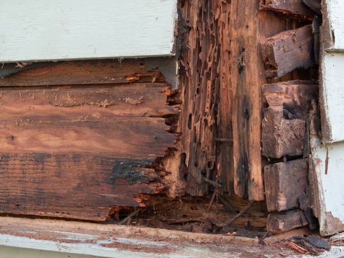 Termite Damaged Wood In A Fenton Crawl Space